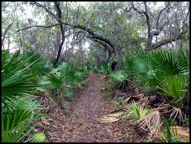 02c - South Creek - 'Old'  Florida type trail