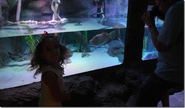 Sea Life Aquarium 063 - Copy