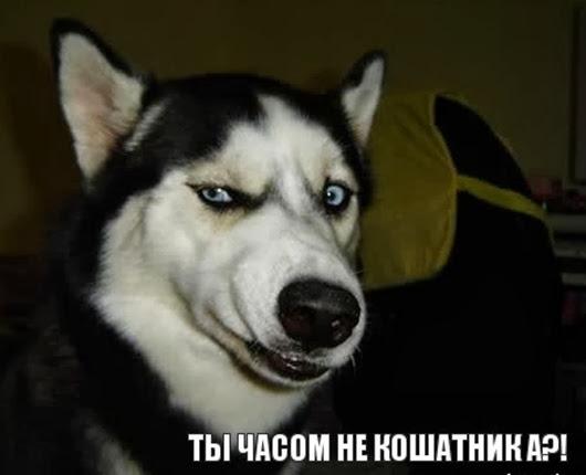 sobaka-podozrevaka_35590108_orig_