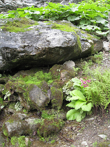 As you may have gathered by now, the rocks are a vital part of Innisfree, and of Chinese garden design in general. They anchor plantings and create a little world of their own.