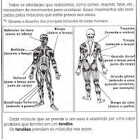sistema muscular.jpg