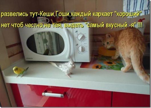 541ce065ce0c55c0ec447e9251f_prev