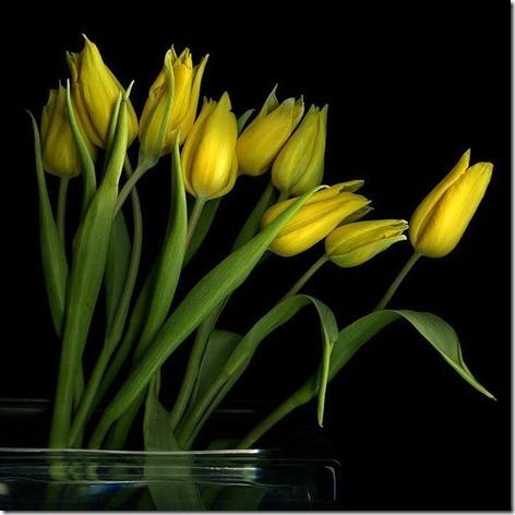 flores-facebook-tumblr-rosas-las flores-fotos de flores-756