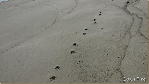 Birding south beach_040