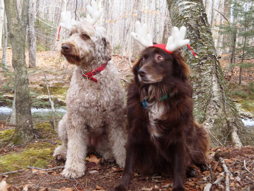 Cici Y. from Sandwich, NH, found these reindeer in the woods...Wait, those aren't reindeer!
