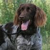 Honden » I-nest Gippe en Jip 2009