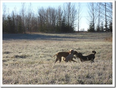 20121114_dogs_008