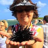 Sue's Keeping A Close Eye On Her Spiky New Friend - Philipsburg, St. Maarten