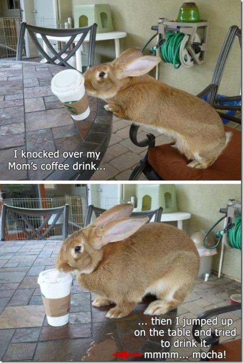 bunny-rabbit-shaming-5