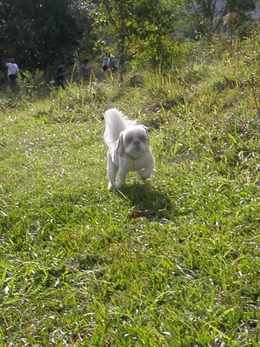 Dogs Trekking 4 (118)