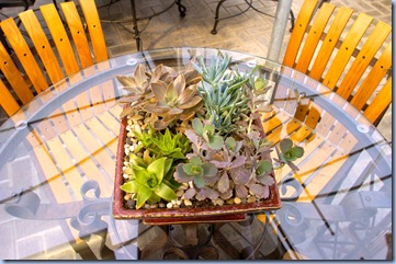 Photo%20for%20Terrarium%20article%20in%20Living%20Section