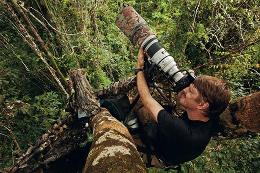 Photographer Tim Laman shooting King Bird of Paradise from a canopy platform in lowland rain forest