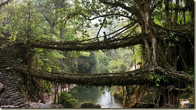 Tree bridge 1
