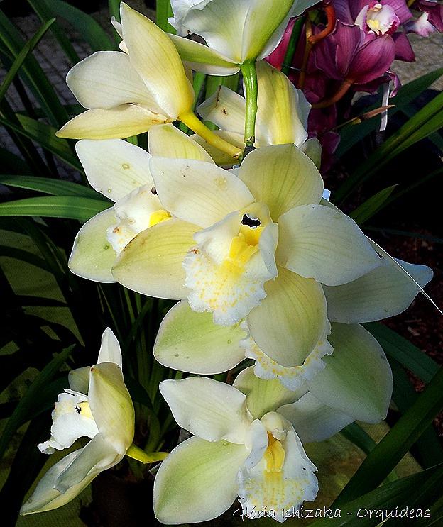 Glória Ishizaka - orquideas 22