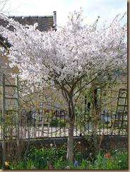 garden colours 011