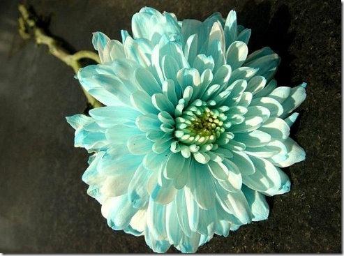 flores (64)