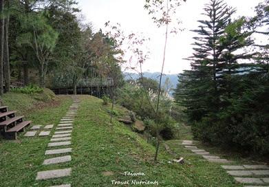 三峽熊空茶園 (4)