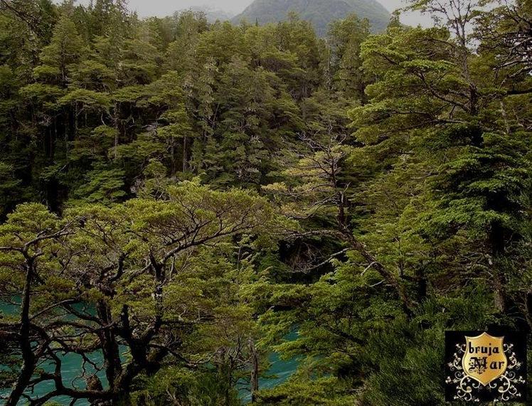 Argentina-Chubut.bosques,debrujaMar-0708