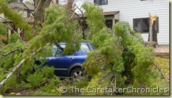 high-winds-tree-downed-car-bedford-crescent
