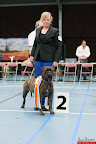 20130510-Bullmastiff-Worldcup-1459.jpg