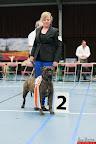 20130510-Bullmastiff-Worldcup-1459.jpg