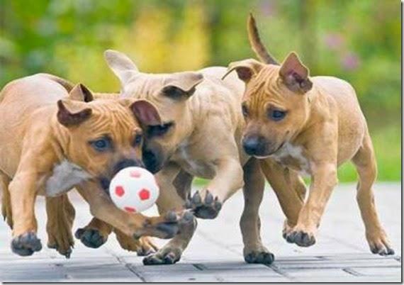 test genetici per i cani