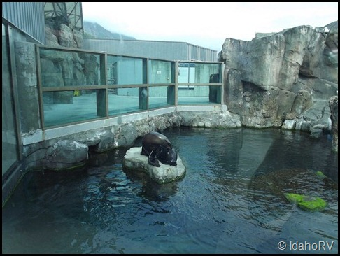 Alaska-Sealife-Center-3