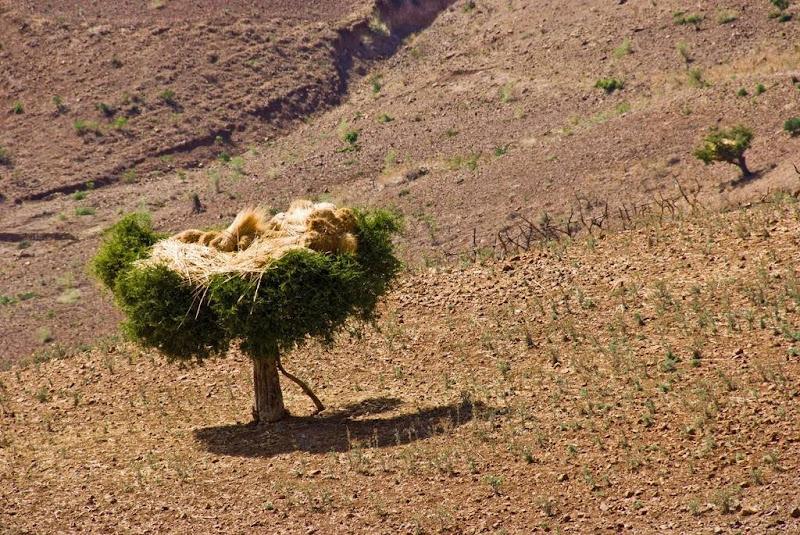etiopia-deubandeira-15