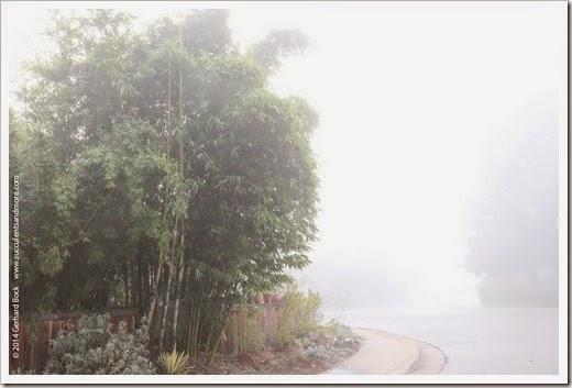 141223_fog_010