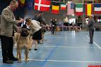 20130511-BMCN-Bullmastiff-Championship-Clubmatch-1648.jpg