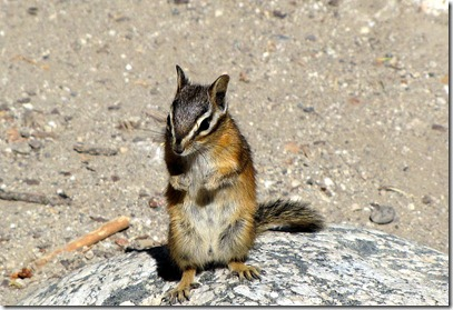 Oooh cute- this chipmonk really liked Dave