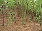 Trójmiejski Park Krajobrazowy, podejście pierwsze. Widać już jesień niestety.
