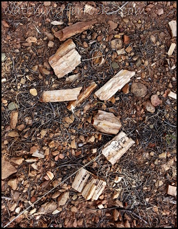 PetrifiedWood Chips_110755