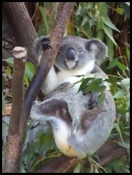 Australia, Kuranda Animal Park (13)