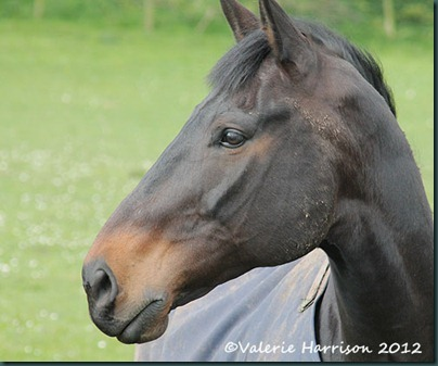 15-horse