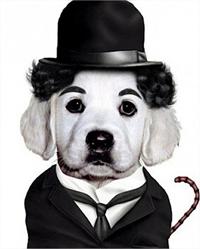 Mascotas como personajes famosos