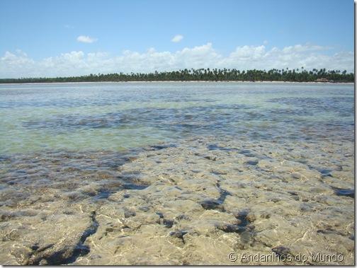 Rota Ecológica de Alagoas Patacho Recifes de Coral