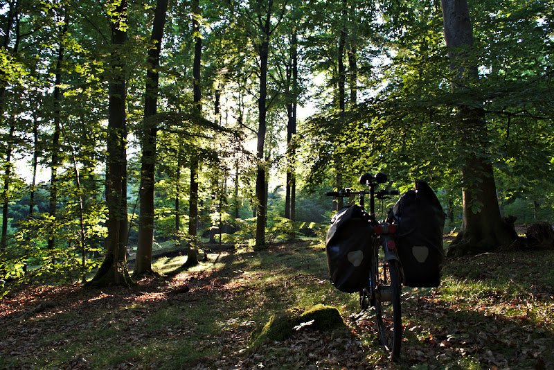Riding towards the light, through the ancient beech forests from Ruegen, northern Germany.