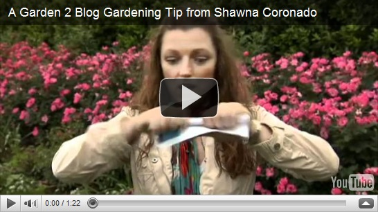 How To Get Rid Of Earwigs In Your Garden The Hosta Pest From Hell Shawna Coronado