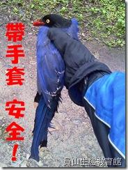 帶手套避免被野鳥啄傷