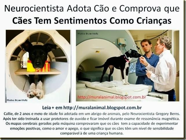 Neurocientista Adota Cão e Comprova que Cães Tem_thumb[1]