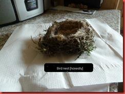 bird nest 2