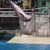 Boudewijn Seapark-033.JPG
