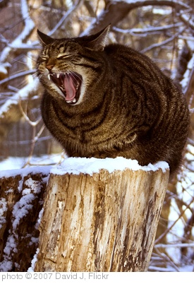 'king harold' photo (c) 2007, David J - license: http://creativecommons.org/licenses/by-sa/2.0/