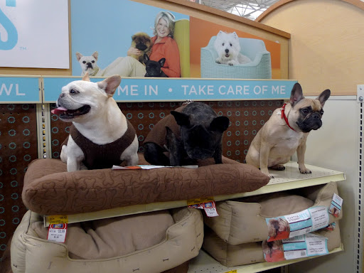 Now, the key to being a spokesdog is really showing how much you enjoy the product.  Take this dog bed, for example!  See how Sharkey and I squish our paws into it?  Very comfortable!