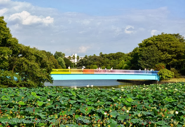 Glória Ishizaka - Jardim Botânico Nagai - Osaka 32