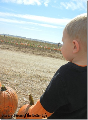 Pumpkin Patch Gazing