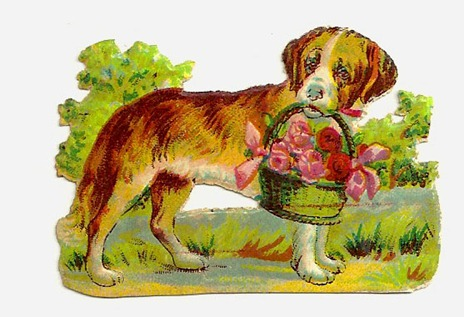 dogbasket