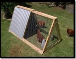 kandang ayam di kebun 014