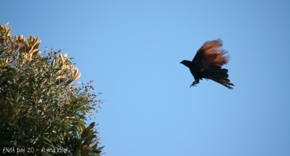 Day020 Flying Kites